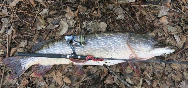 Confidence – катушка для любой рыбалки