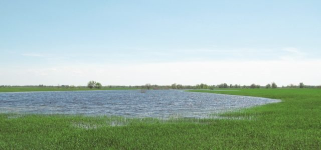 Крупная щука в начале паводка
