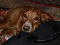 Бродячие собаки: казнить нельзя помиловать