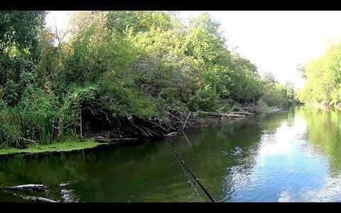 Это Красноперка, Нет это Язь.Рыбалка в красивых местах.