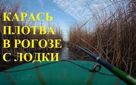 КАРАСЬ ПЛОТВА в РОГОЗЕ с лодки в ноябре