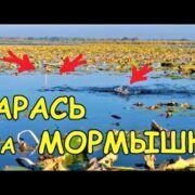 ЛОВЛЯ КАРАСЯ на МОРМЫШКУ /БАТЛ /КРЮЧОК vs МОРМЫШКА
