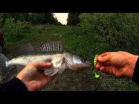 Рыбалка на малой реке весной 2017.Против Жены не Попрёшь!!!