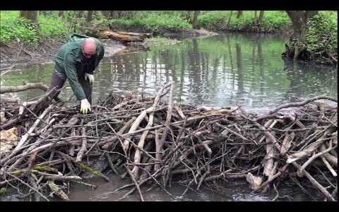Зарыбление ручья в… одной из областей России. Видео нашего друга и сподвижника.