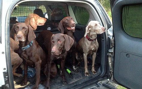 Петров день 2020: Положение о Первенстве по охоте с подружейными собаками