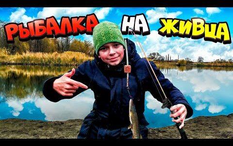 Рыбалка на живца на щуку, ловля живца пауком!